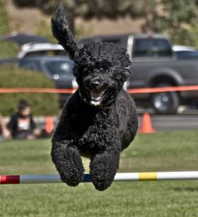 A happy dog!!