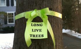 A well-loved tree in Hamden, Conn.