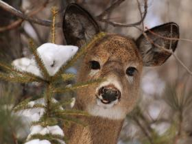 A new proposal is floating the idea of bow hunting on Sundays.