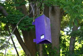 One of the purple box traps used to capture emerald ash borer beetles.