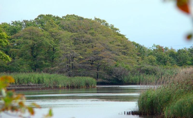Wetlands on Plum Island