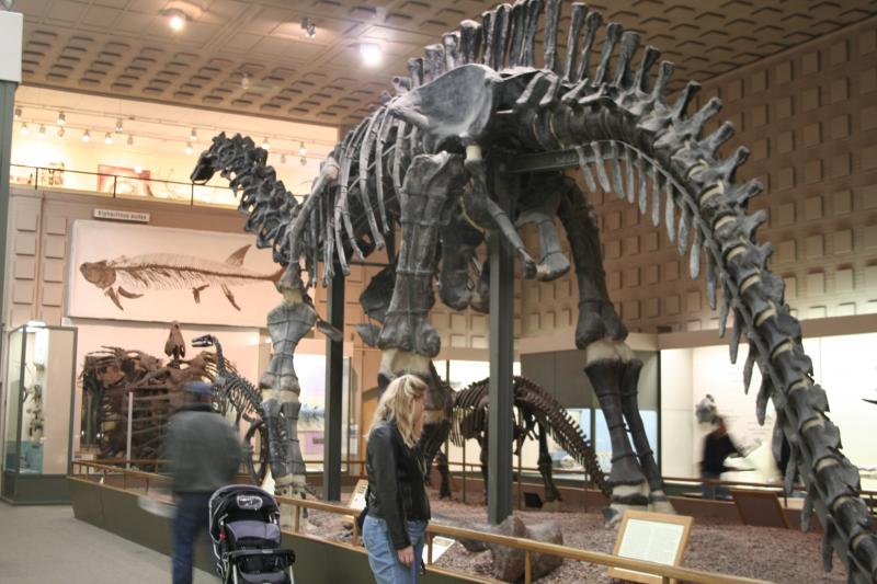 Peabody's Great Hall of Dinosaurs