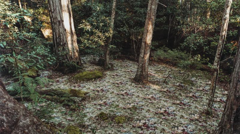 "In ""Groundspeed (Rose Petal) #17,"" Rosemary Laing covers the forest floor with an indoor carpet meant to imitate the grounds of a garden."