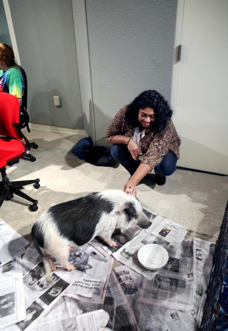 WNPR's Lucy Nalpathanchil makes friends with Rosie.
