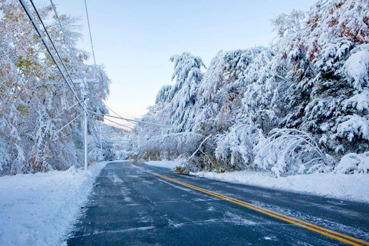 Scientists at UConn are researching how to build more wind-resistant trees in the roadside forests near power lines. It's part of a quest to stave off large-scale power outages in the wake of storms.