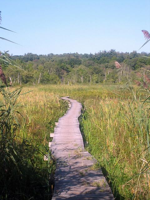 The boardwalk at White Memorial.