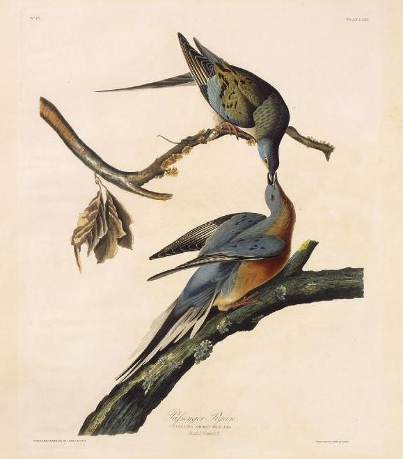 Bohemian-American composer Anthony Heinrich was close friends with John James Audubon, who may have inspired Heinrich to compose Columbiad, a celebration of the passenger pigeon.