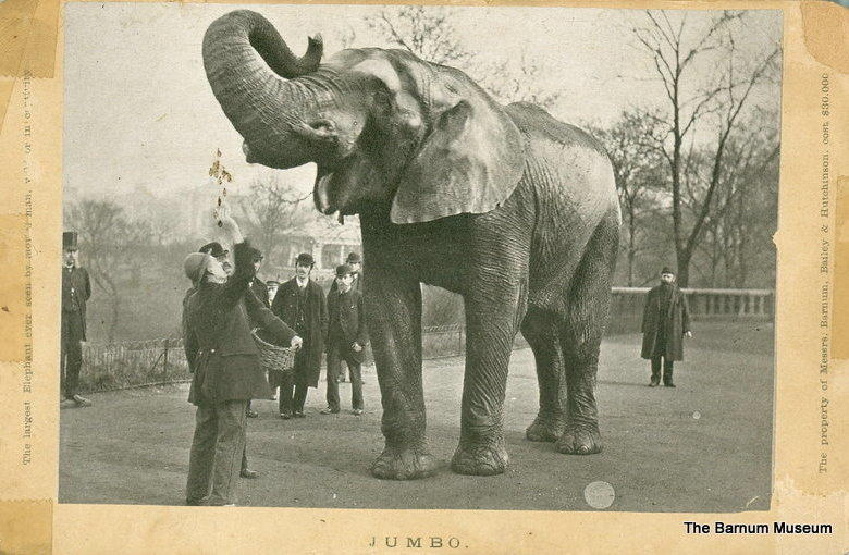 Jumbo being fed by his keeper, Matthew Scott. The two were so  inseparable that Scott moved to the United States with the elephant when Barnum purchased Jumbo from the London Zoo.