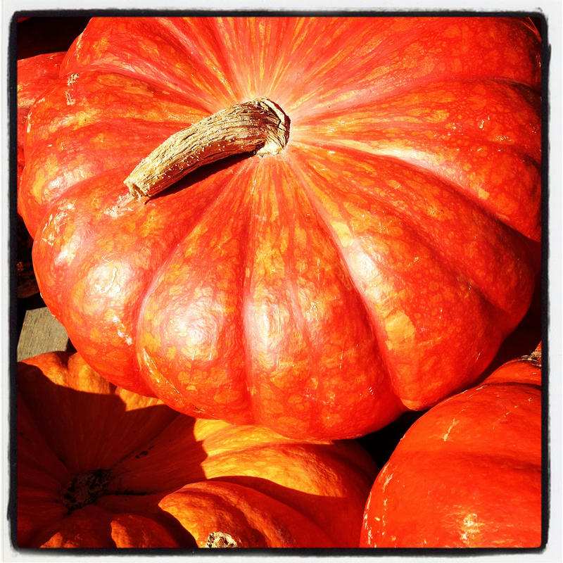 Rouge Vif d'Etampes is known as the Cinderella pumpkin because it looks like one that may have turned into a carriage in a fairy tale.