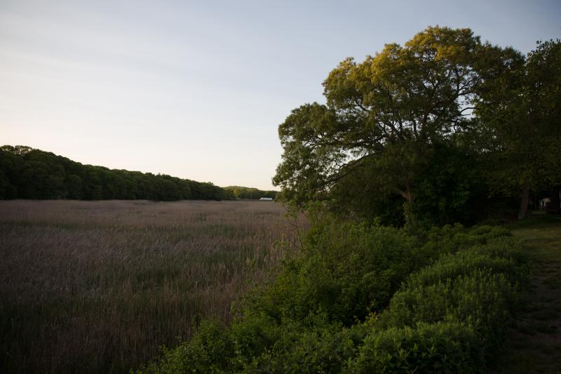 The marsh on the Lieutenant River near the historic section of Old Lyme. The FRA proposed running a rail line through this area, but was met with pushback from the community.