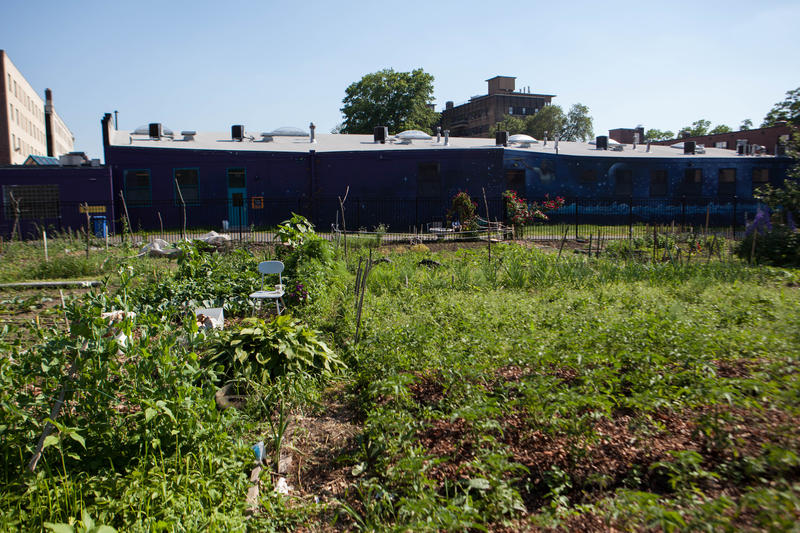 Knox Park's Aetna Wellness Community Garden on Niles Street in Hartford, Connecticut.