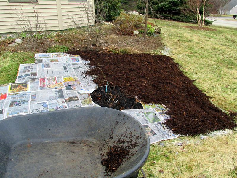 Lasagna gardening or sheet mulching in action.