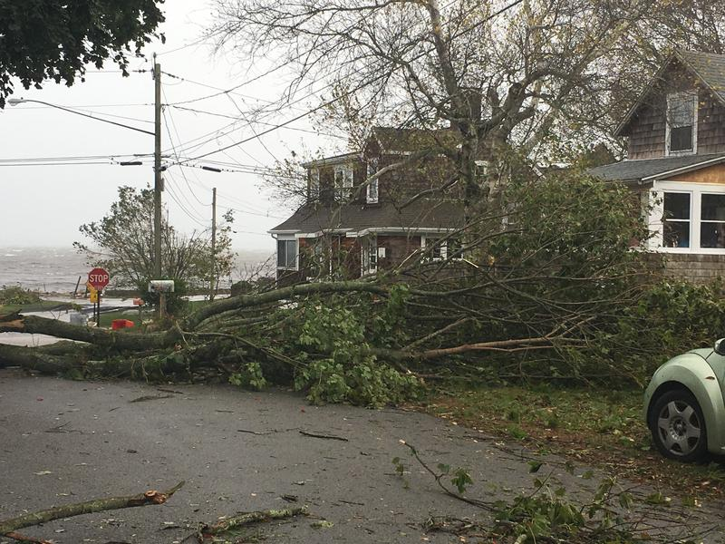 Downed tree blocks a road in Stonington, Connecticut.
