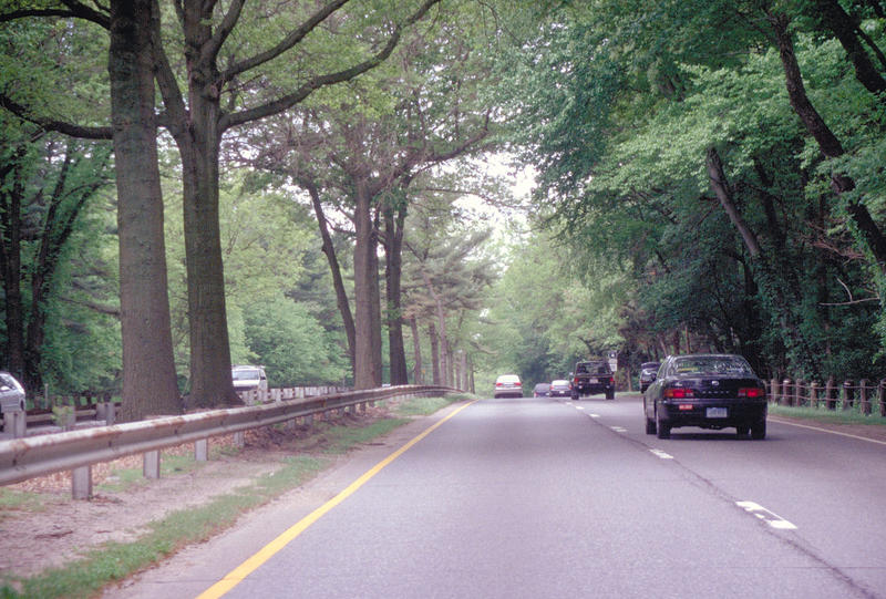A photo from 2007 shows tree canopies on the Parkway. That same year a couple was killed when a tree fell on their car while driving on the highway.