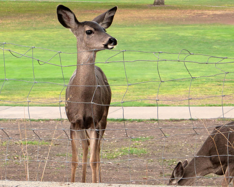 Keep the deer where you want them -- away from your garden.