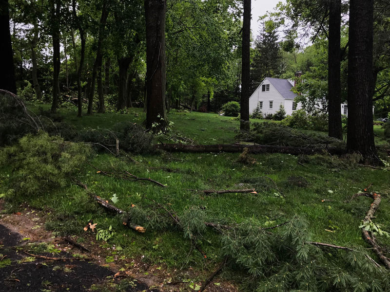Fallen trees cover the lawn of a home near Ridgefield High School.