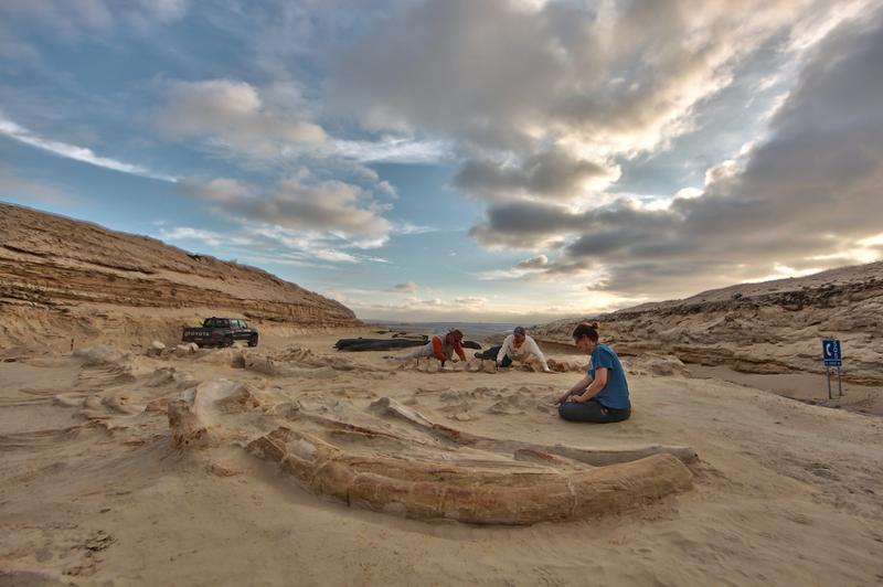 Chilean and Smithsonian paleontologists study several fossil whale skeletons at Cerro Ballena, next to the Pan-American Highway in the Atacama Region of Chile, 2011.