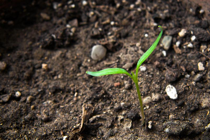 connecticut garden journal test your soil - Garden Soil