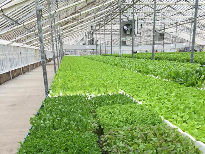 H2O Farm in Guilford specializes in growing leafy greens using hydroponics.
