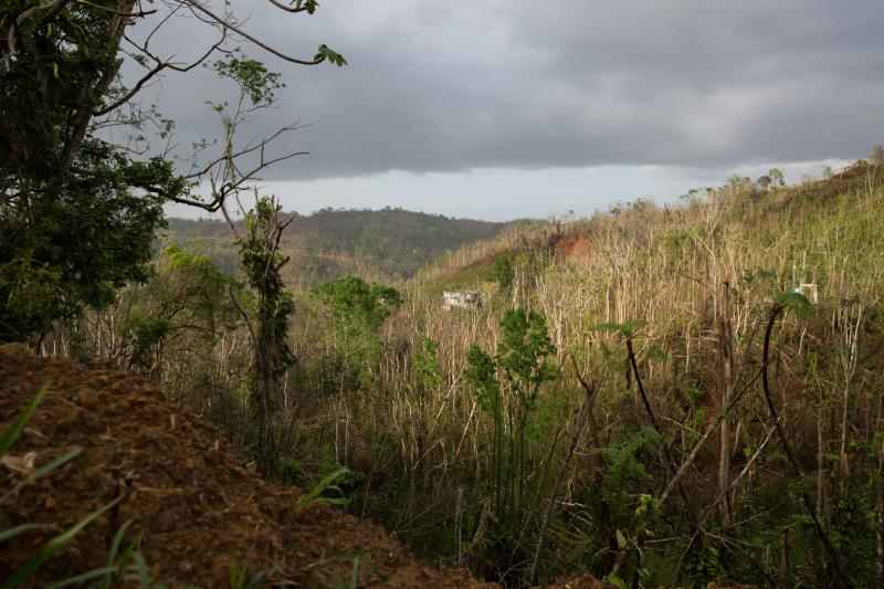 Trees stripped bare by Hurricane Maria along a mountain road on the west side of Puerto Rico in October 2017.