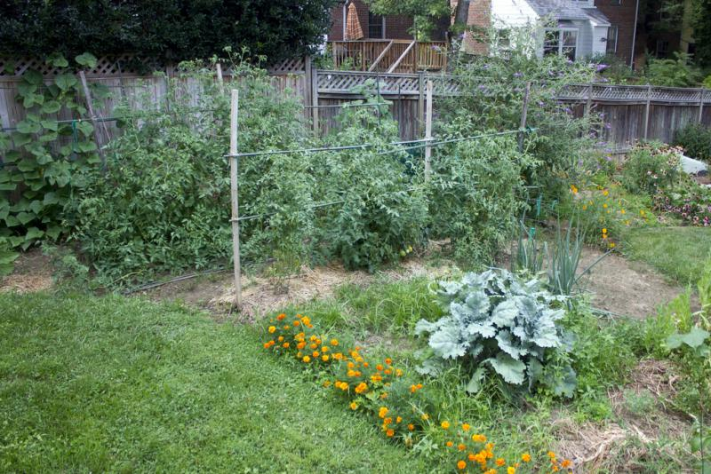 What's your gardening resolution?