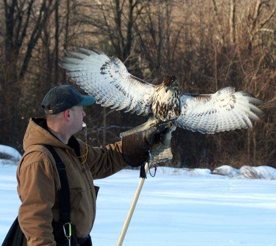 A Falconer and Red-Tail