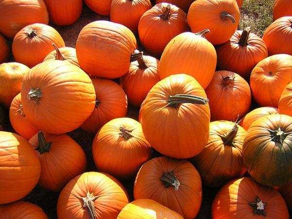 Food Schmooze: Pumpkin Pie with Brown Sugar-Walnut Topping | WNPR News