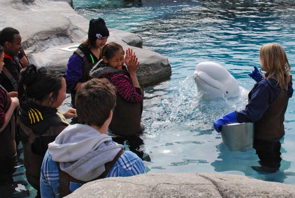 Beluga whale Naluark treated students to a giant spit.