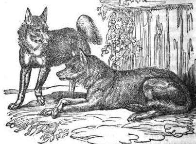 Wolfdogs, as illustrated in The Menageries: Quadrupeds Described and Drawn from Living Subjects by W. Ogilby, 1829.