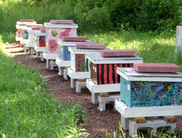 Bee hives at UConn.