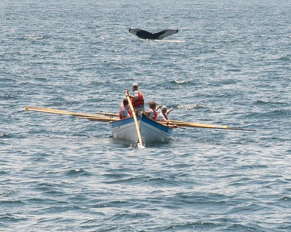 One of the Morgan's whaleboats approaches a whale for the first time in 100 years.