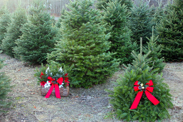 Christmas trees at Evergreen Acres Tree Farm and Nursery in Colchester,  Connecticut. - Connecticut Garden Journal: The Enchanting Scent Of A Live Christmas