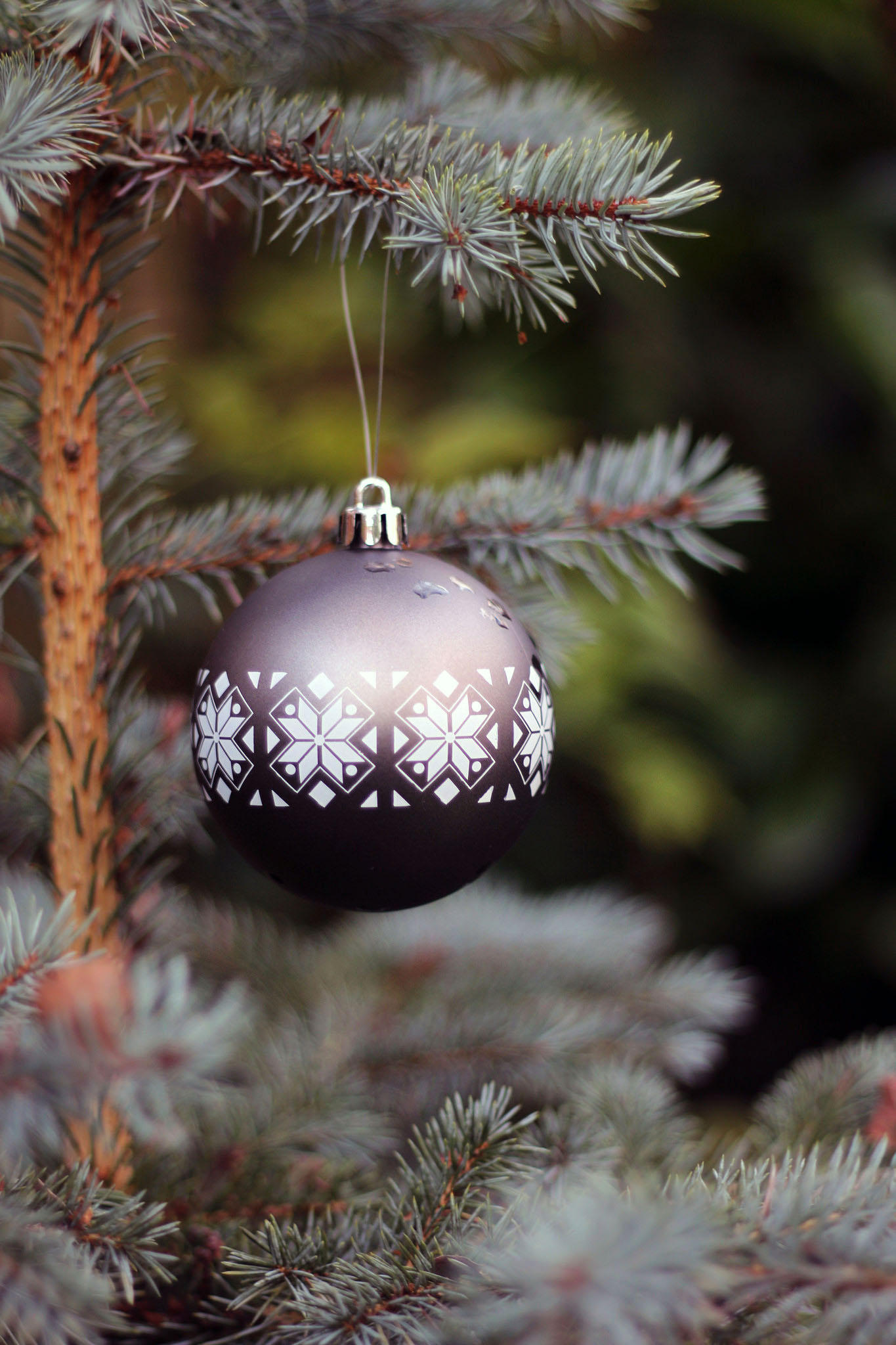 Christmas Tree Ornament Outdoors