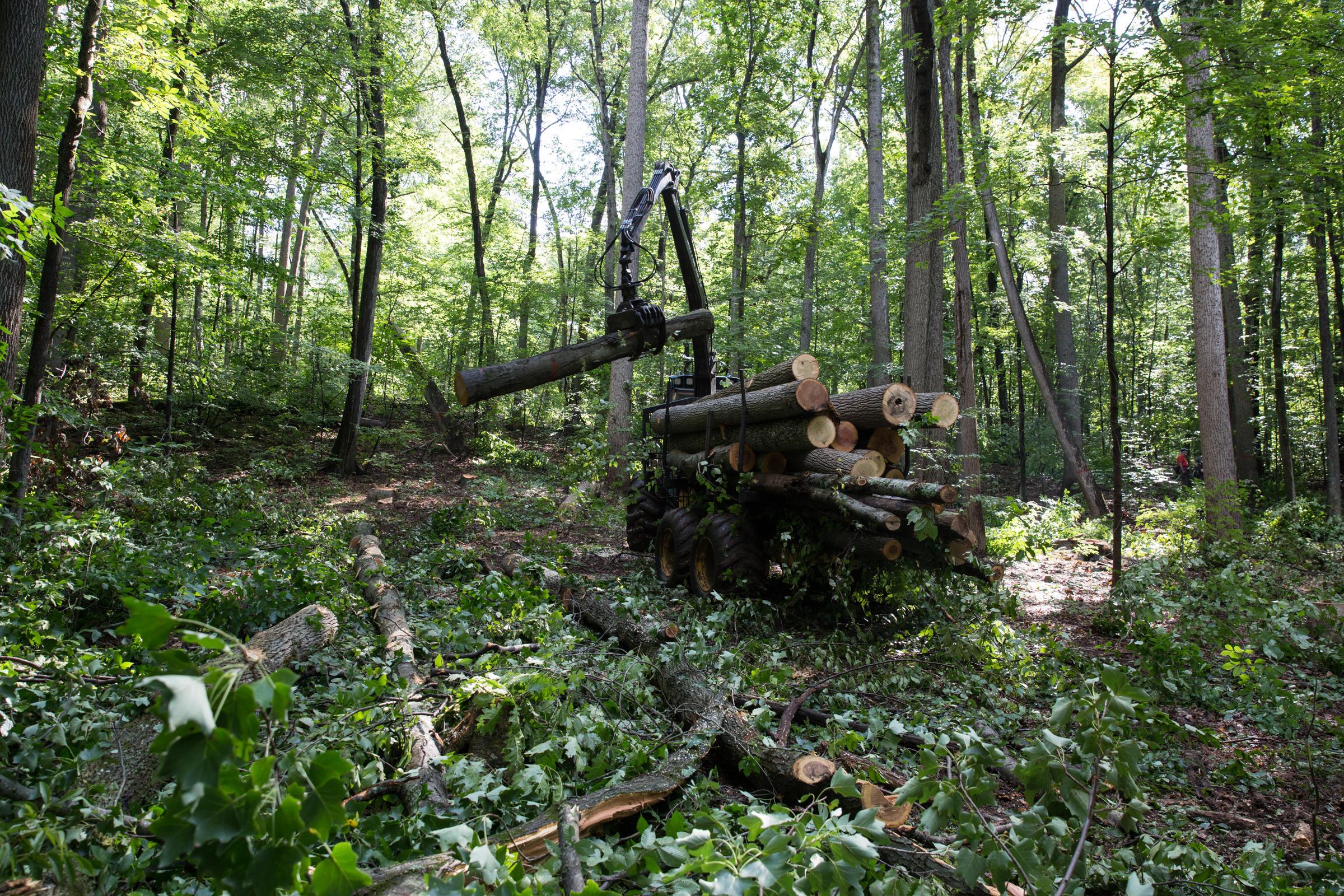 deforesting machine