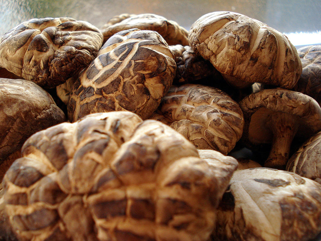 Connecticut garden journal shiitake mushrooms connecticut public radio - Growing french walnuts for a profit ...