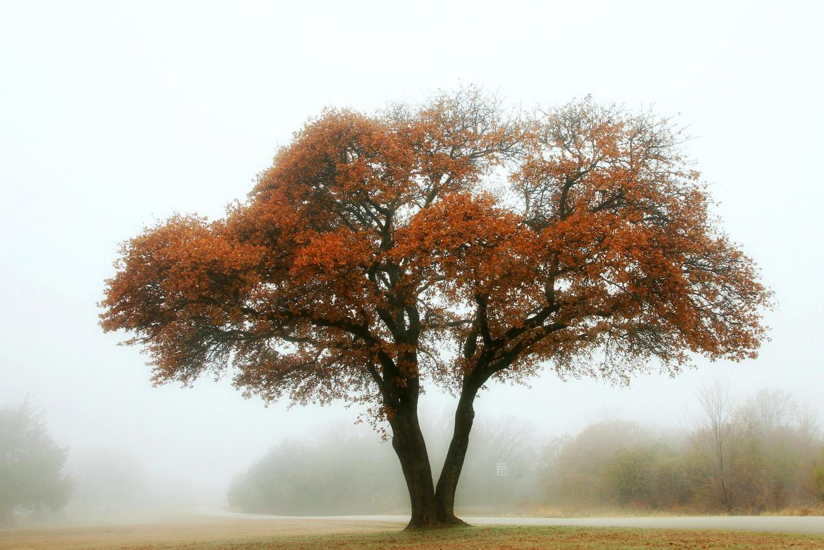 Connecticut Garden Journal: The Great Oak Tree | Connecticut Public ...