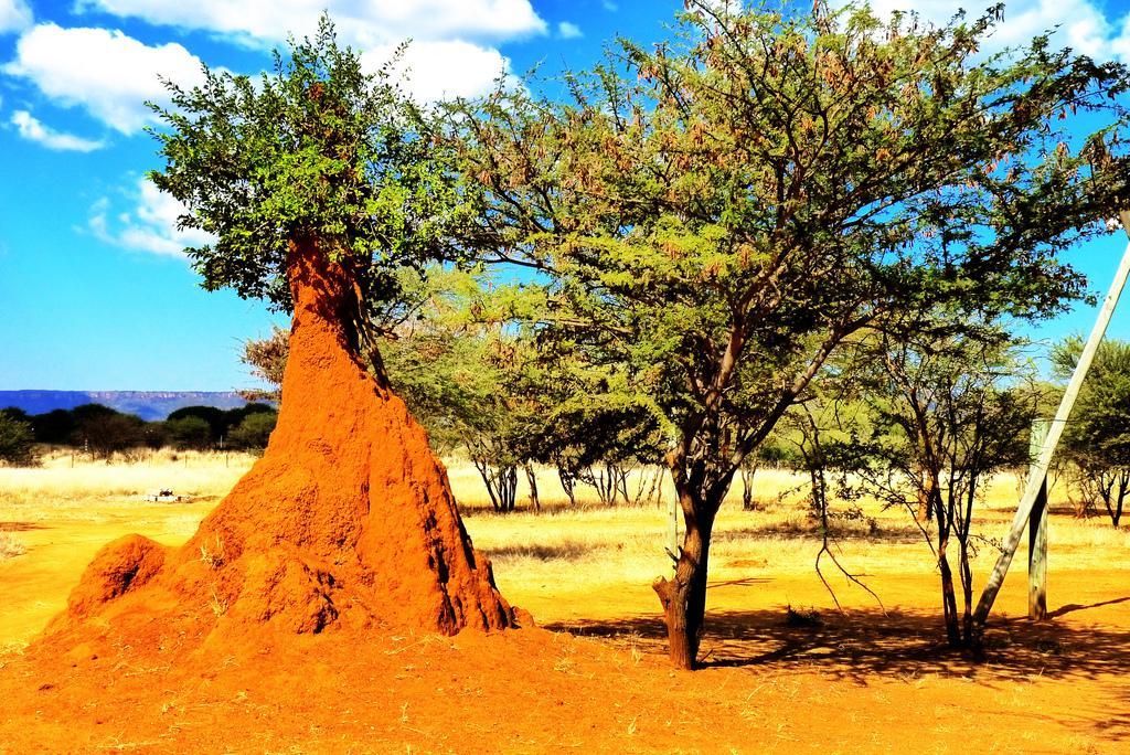 The Wonder Of Termites (Yep, That's What I Said)