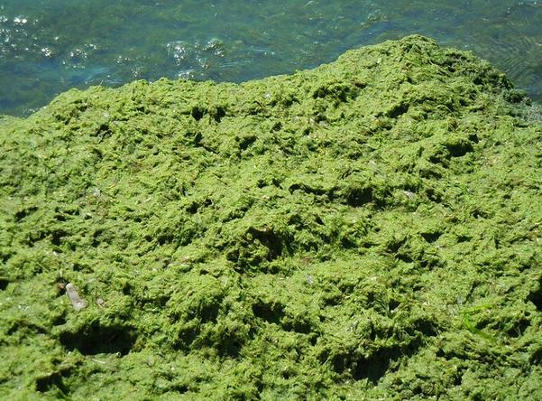 Lake Erie has seen toxic algae blooms in recent years. Scientists say they're largely fueled by the runoff of phosphorus-rich fertilizer into the lake's watershed.