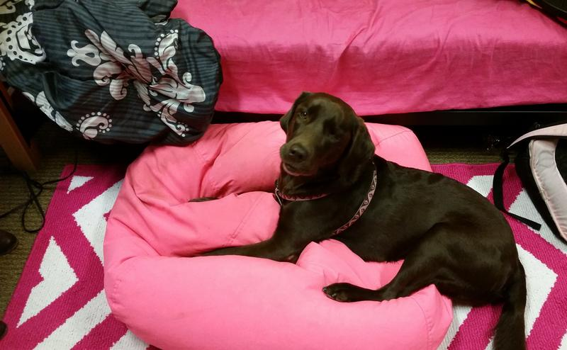 Belle on her bed at Otterbein University