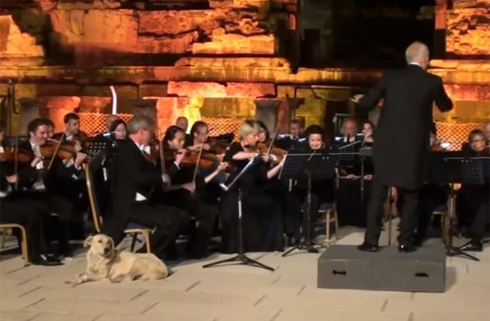 A dog found a comfy spot on stage during an orchestra concert in Turkey.