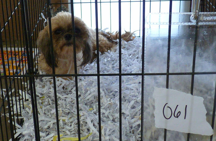 Puppy Mill Regulations Take Another Step Toward 2018 Ballot Wosu Radio