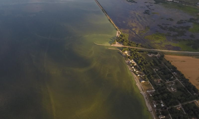 Agricultural runoff-caused algae blooms east of Toledo.