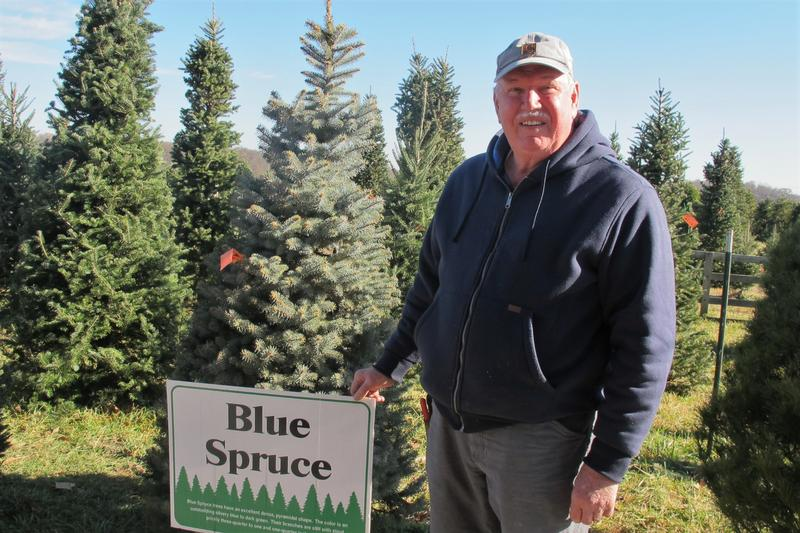 William Cackler, of the Ohio Christmas Tree Association, grows 20,000 trees on his Cackler Family Farms.