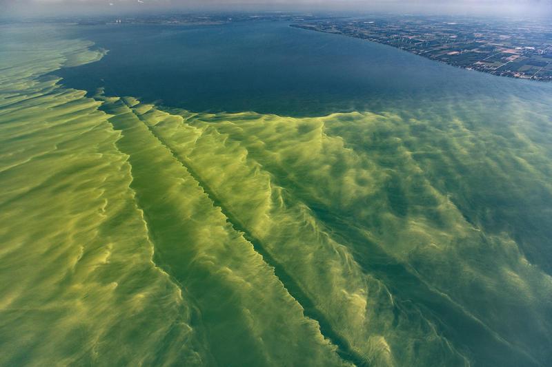 Lake Erie's harmful algae blooms on August 14, 2017.