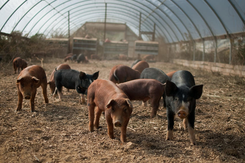 Ohio hog farmers produced more than $600 million worth of pork products in 2015, according to the National Pork Board.