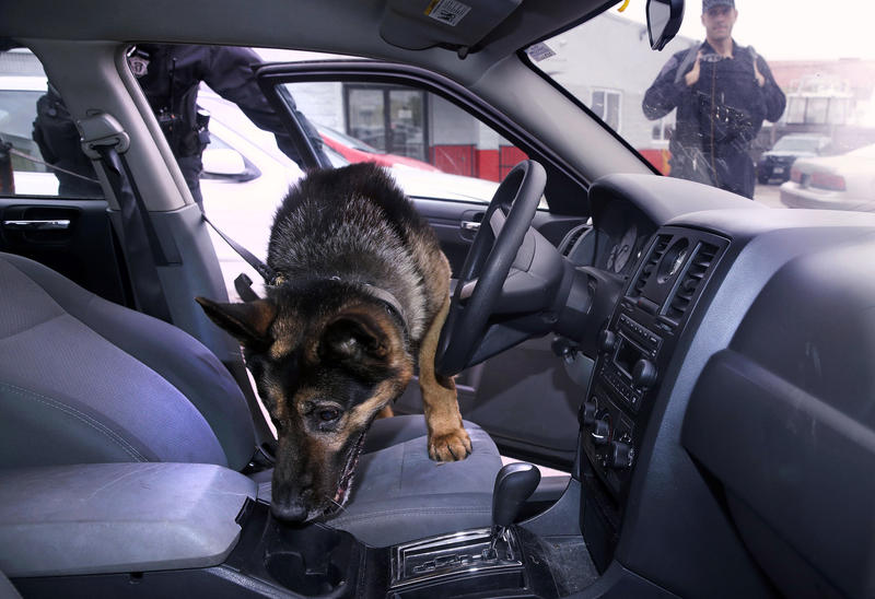 Maximus, a K-9 with the Massachusetts State Police, searches a car for drugs during a training session in 2017. In Ohio, the state Highway Patrol uses dogs more often on black drivers.