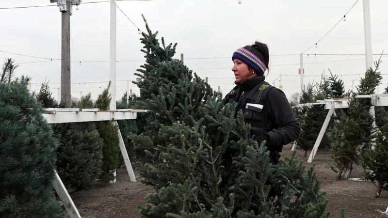 Kim Londrico, owner of Londrico's Christmas Trees in Cleveland, rearranges the merchandise.