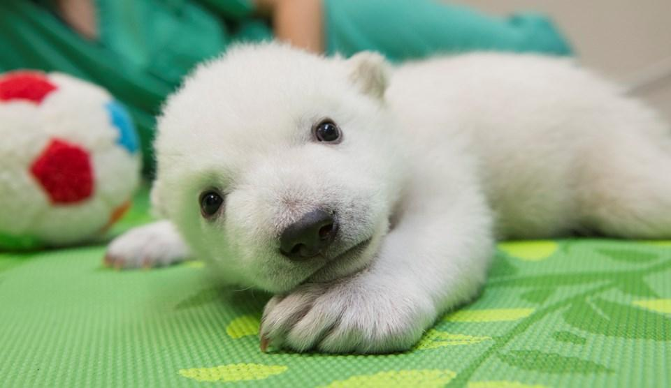 Columbus Zoo Gives Names Polar Bear Cubs on The Three Bears