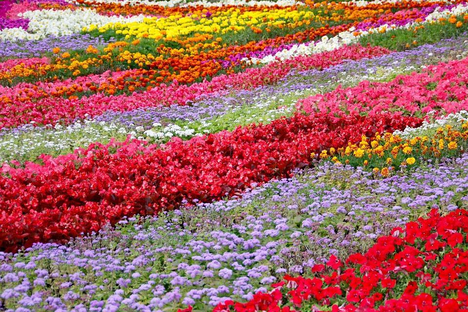 Flowers Gardening Design And Floriculture Wosu Radio