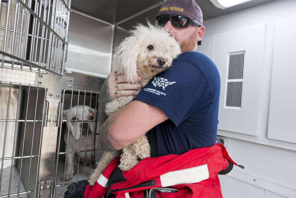 Brookfield animal activist finds optimism in Texas rescue efforts